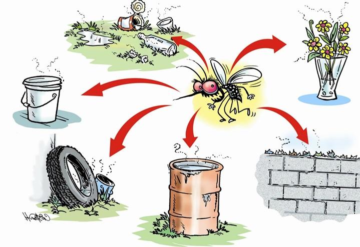 Mùa sinh sản của muỗi tại những nơi ô nhiễm, ẩm thấp cũng là thời điểm con người dễ mắc sốt xuất huyết nhất